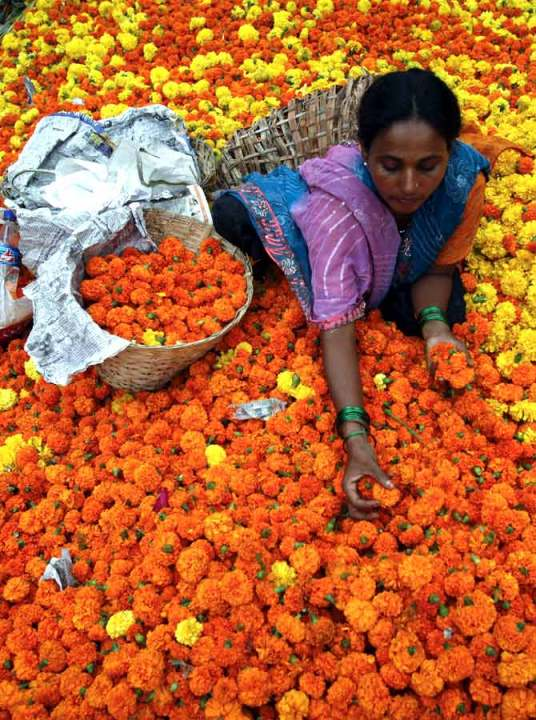 Sorting Marigolds